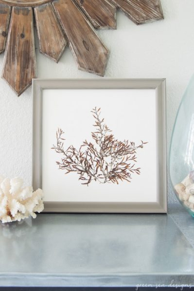 New botanical prints of marine algae in the Green Sea Designs Etsy shop!